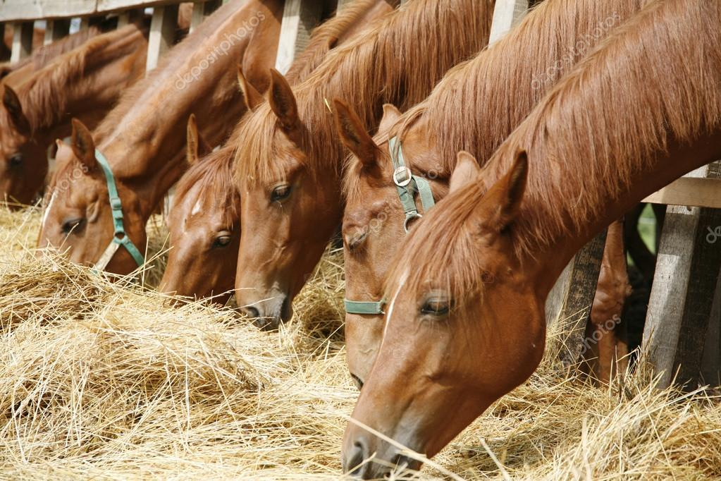 pupilaje de caballos